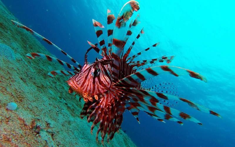 фото на гоупро под водой